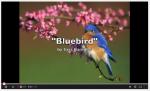 Bluebird by Sara Bareilles