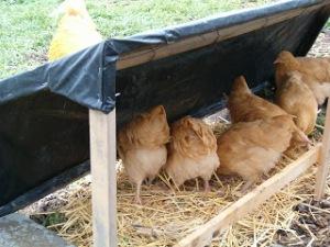 Chicken Coop 025
