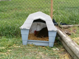 Chicken Coop 034
