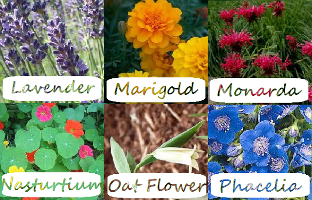 Label Flowers 4